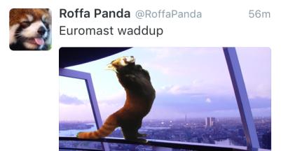Roffapanda1