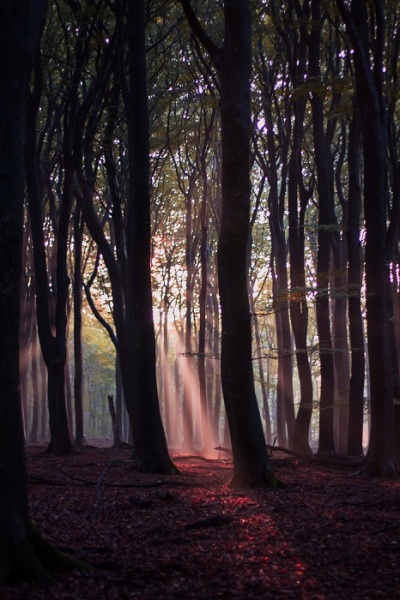 veluwe_herfst-59-van-60